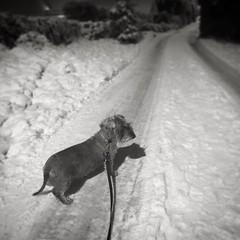 Out walking the dog. ❄️ #winterwonderland