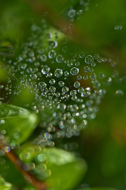 Wet Diamonds