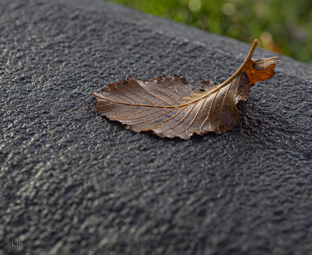 Just an Autumn Leaf