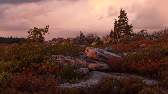 Evening Comes to the Dolly Sods