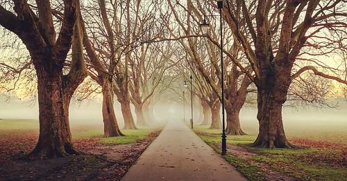 trees park paths ngc cambridge fog morning sunrise outside nature flickr2019