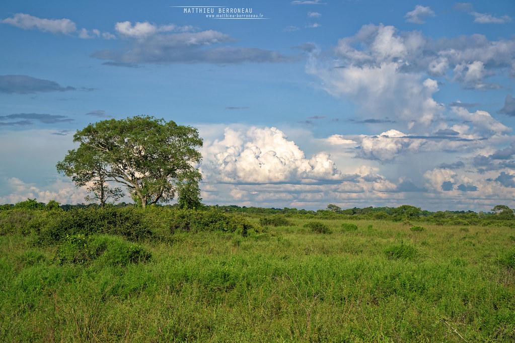 Pantanal, Mato Grosso