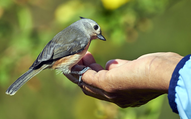 A bird in the hand is worth two in the bush!