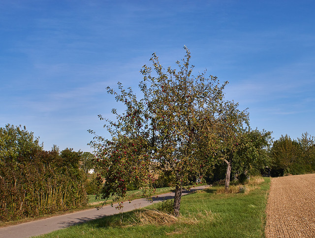 DSC20898 Am Wegesrand - Streuobst