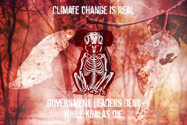 Koalas Die 2019-12-05