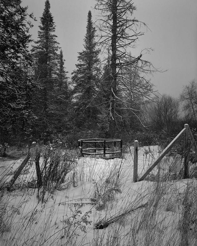 Abandoned Paddock