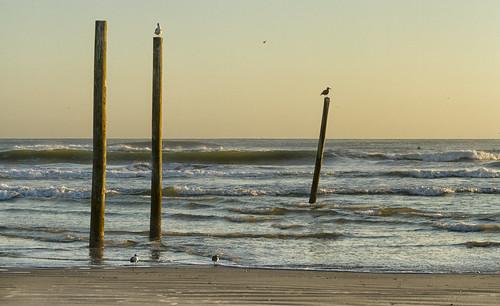 canon7dcanonef70200f4l beach waves florida landscapeimage sammysantiago samuelsantiago fineart walldecor photography newsmyrnabeach piling