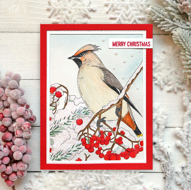 Winter Bird Colored 5