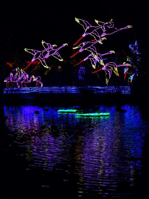 taking flight at River of Lights