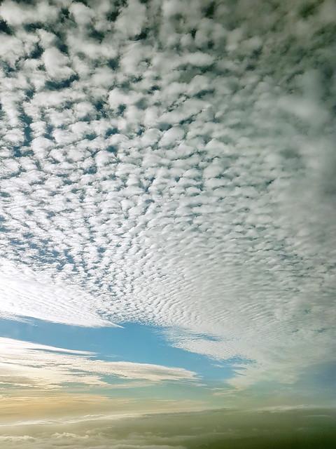 Des moutons dans le ciel néozélandais