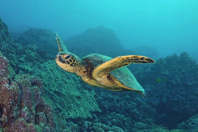 turtle morn