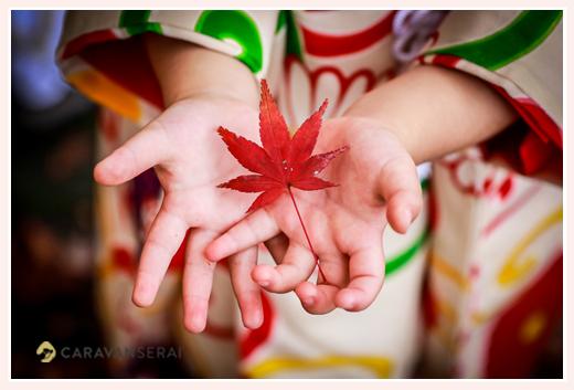 七五三 紅葉したモミジの葉と女の子の手