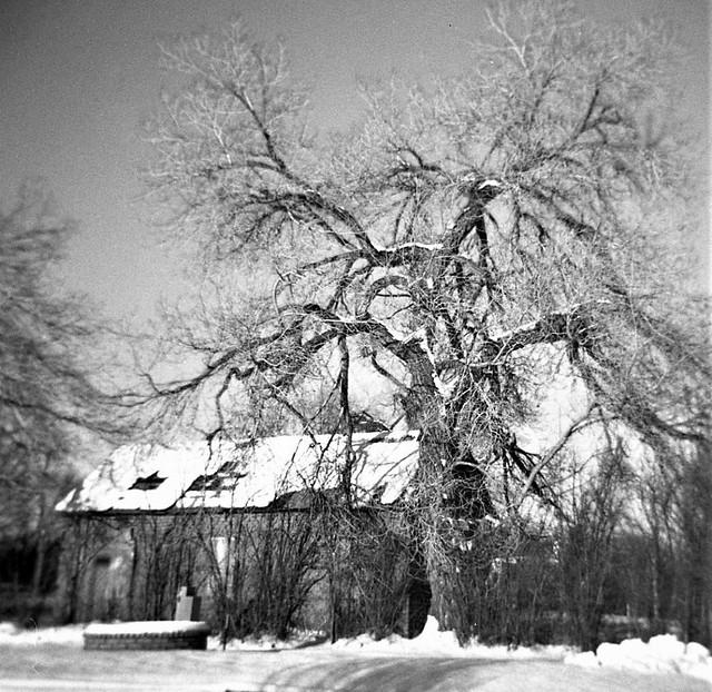 my winter tree
