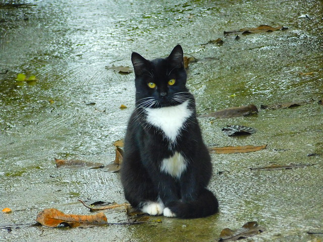 Street Kitten, posing for a picture on a rainy day