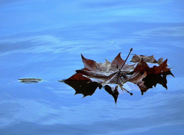 Autumn's End - Leaf On Lake