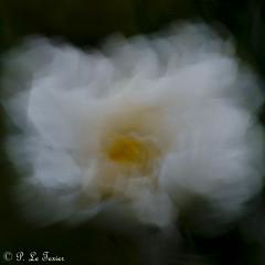 Rêverie florale 023