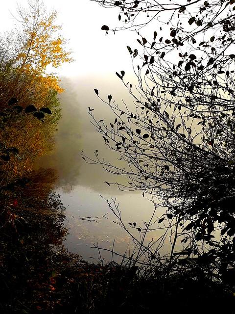Près de l'étang brumeux.