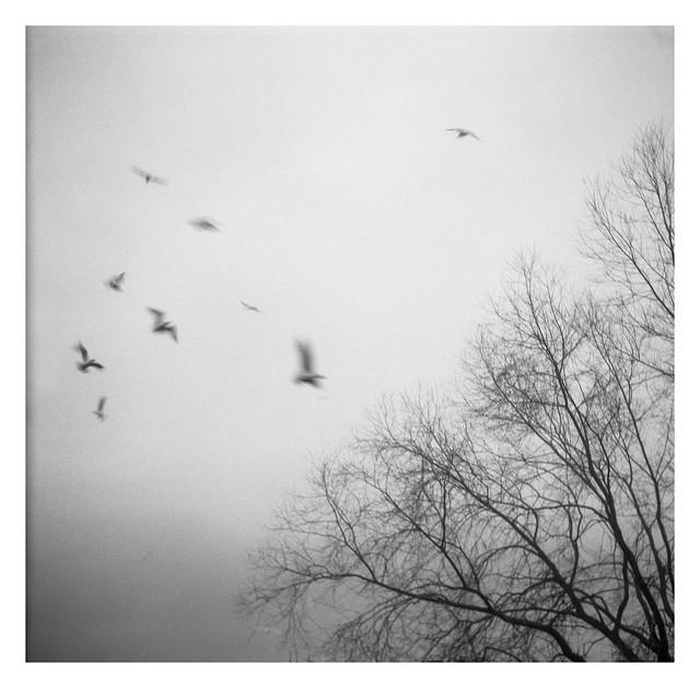 FILM - Gulls