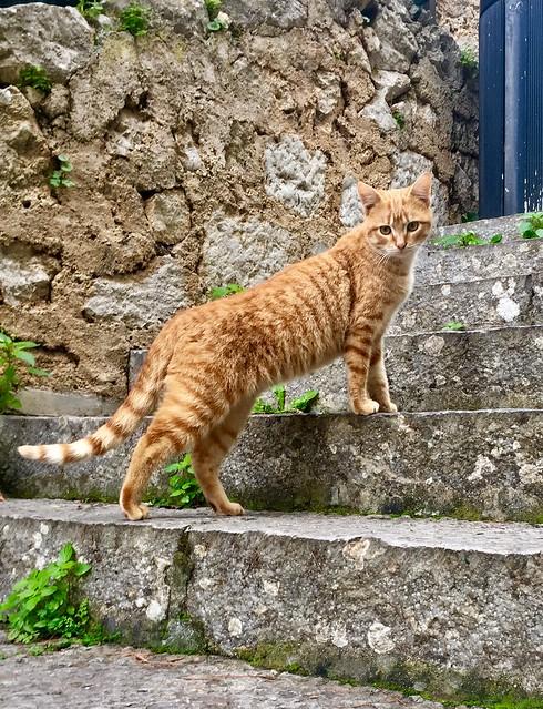 Kitty on the steps of The Santa Rosalia Church in Palermo, Sicily.