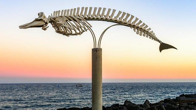 Bones / Huesos