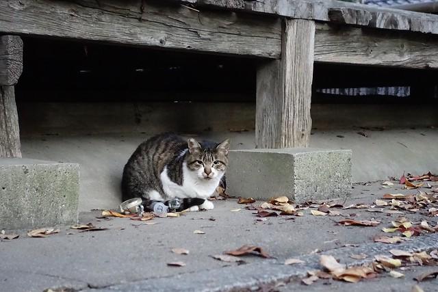 Today's Cat@2019-12-06