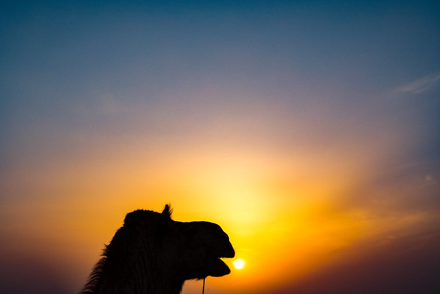 Here Comes the Sun, India