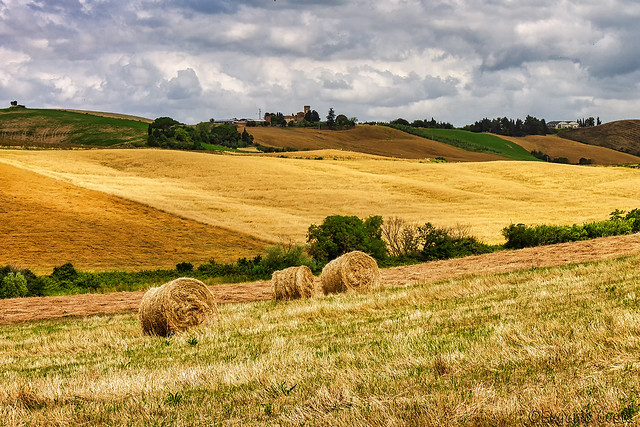Solo nella campagna - Only in the countryside