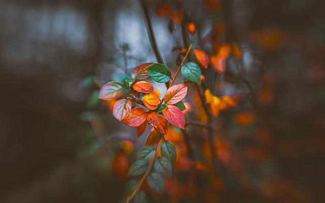 Winter leaves series - 10