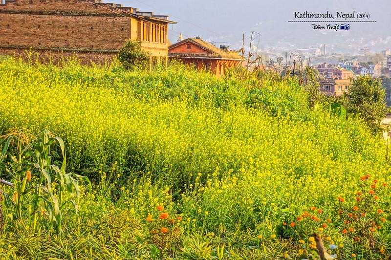 2014 Nepal Kathmandu Street View