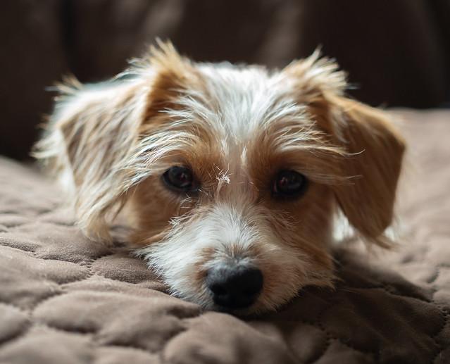 My Little Puppy Minerva!