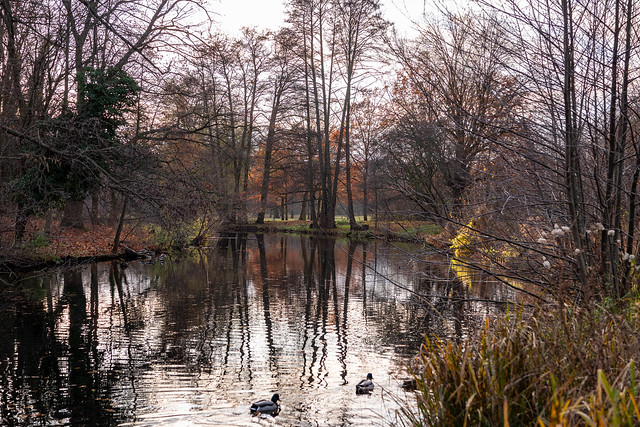 Berlin, Schlosspark Charlottenburg: Herbststimmung am Wasserlauf am späten Nachmittag - Berlin, Charlottenburg Palace Park: Autumn scenery at the water course in the late afternoon