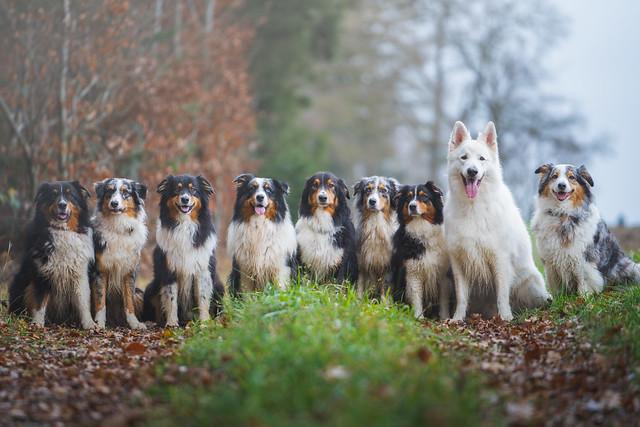 The Shepherds