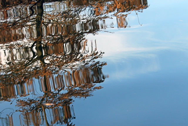 Cypress Tree Reflections