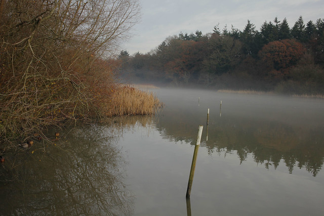Warnham Nature Reserve