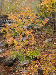 A rainy autumn day on the Eno (4)