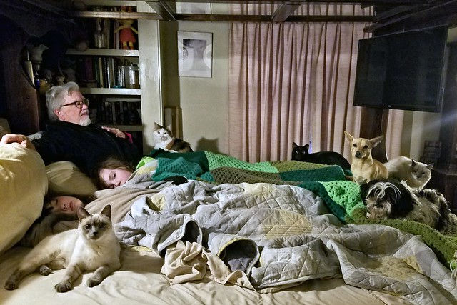Two Dogs, Three Humans, Four Cats