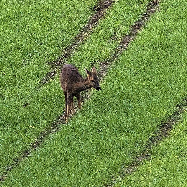 Daring Deer at Dusk