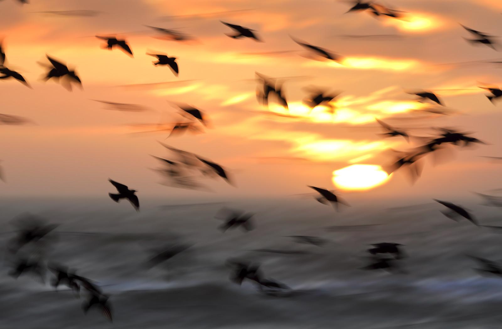 Brighton Starling Blurmuration at Sunset