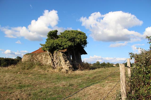 Dans la campagne Normande...
