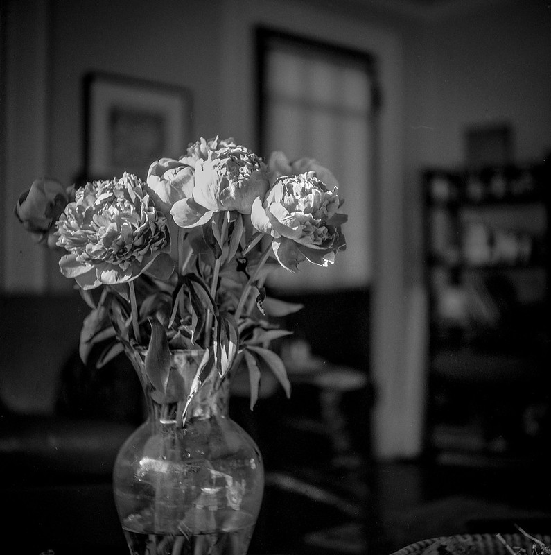 winter peonies, vase, living room, Asheville, NC, Ricohflex Dia M, Fomapan 200, HC-110 developer, 11.16.19
