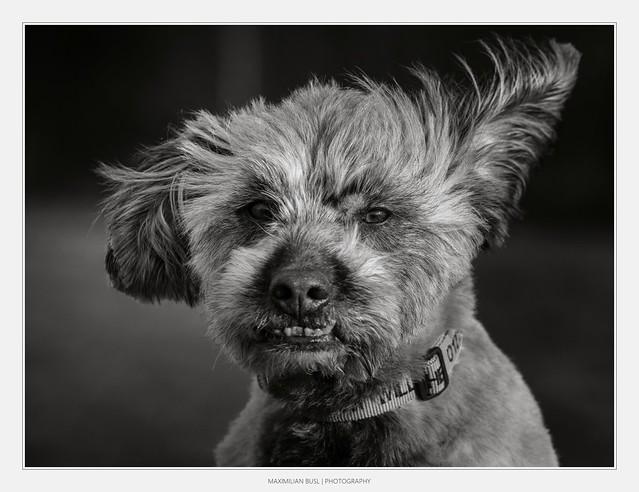 Dogday in B/W (II)