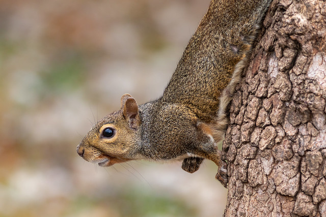 Squirrel - I think she's smiling at me :)
