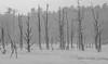Skeleton Trees by jtr27