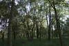 woods grass