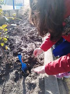I ragazzi piantano i propri legumi (2)
