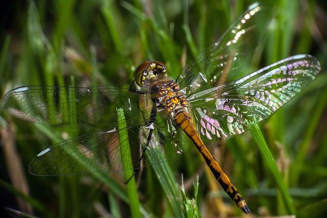 Glassy Wings, Pt. 3 - _TNY_1579S4
