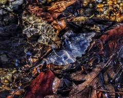 Autumn Adrift  (由  _Tana