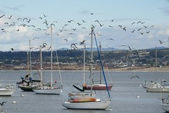 Flocking Over the Bay