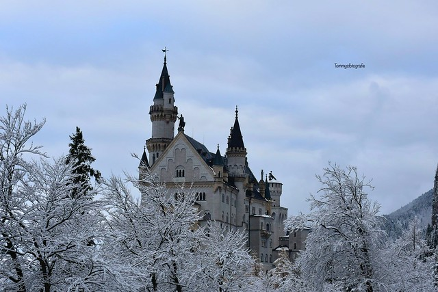 The fairytale castle Neuschwanstein with romantic trees
