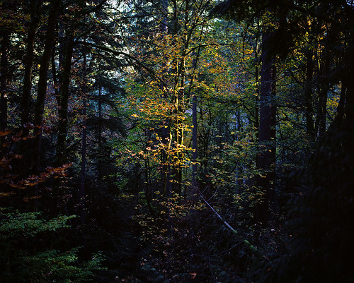 A bit of summer light in an autumn forest